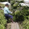 倒木の除去